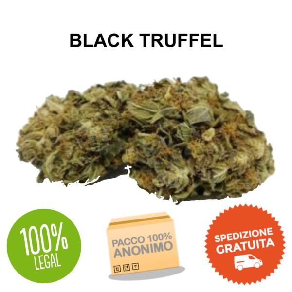 BLACK TRUFFEL CANAPA LEGALE