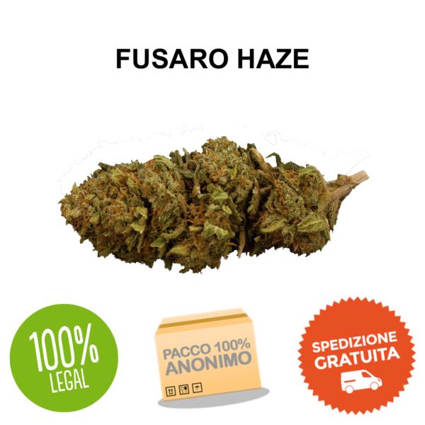 fusaro haze cbd Erba Legale
