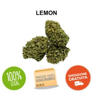 lemon cbd Cannabis Light