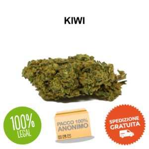 kiwi Erba Legale cbd