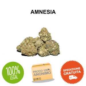 cannabis legale AMNESIA CBD