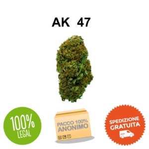 AK 47 CANAPA LIGHT