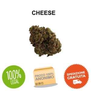 cheese cbd canapa legale