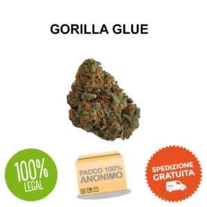 Gorilla glue cannabis legale cbd