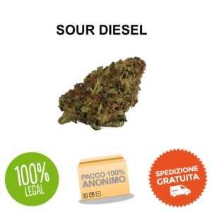 sour diesel cannabis legale