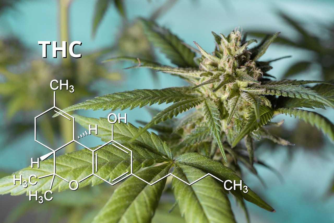 CBD e THC: differenze, benefici e principi curativi
