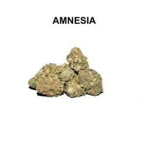 AMNESIA HAZE CANNABIS LEGALE