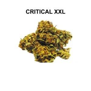 CRITICAL XXL