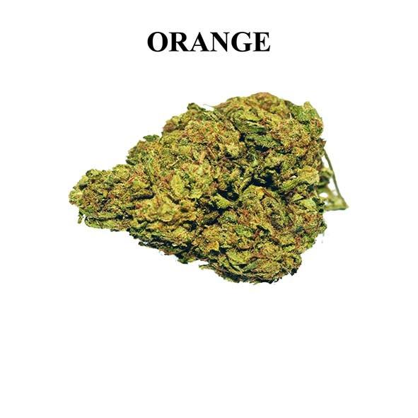 ornage bud