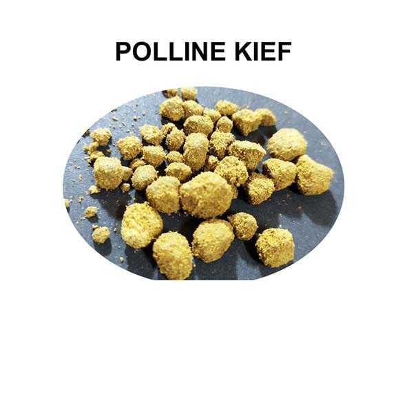 POLLINE KIEF