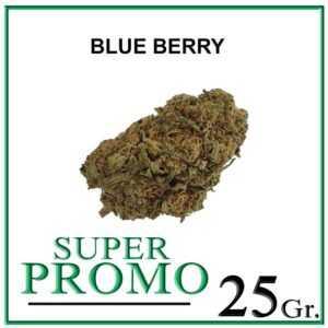 BLUE BERRY 25 Gr. – 50% OFF